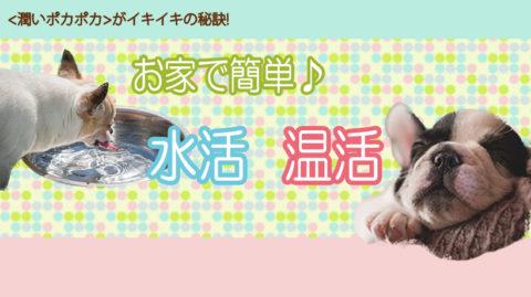 【愛犬】お家で簡単♪水活温活セミナー