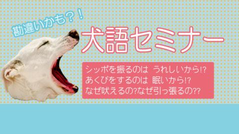 【愛犬】勘違いかも?!犬語セミナー